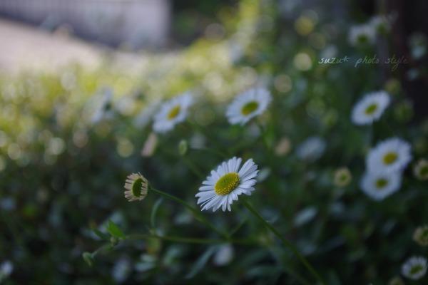IMGP9759-r6.jpg