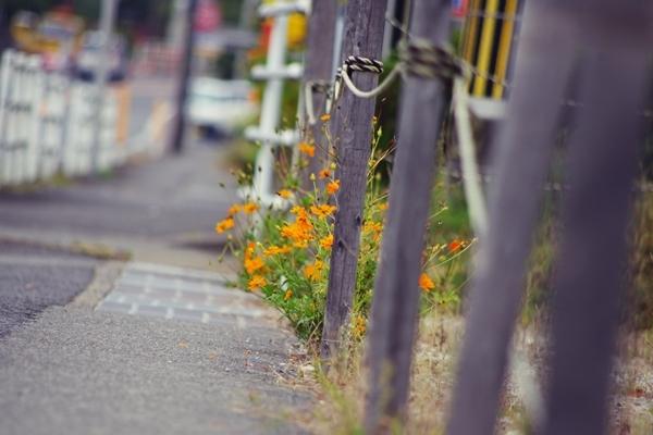 kyounokimi_org.jpg