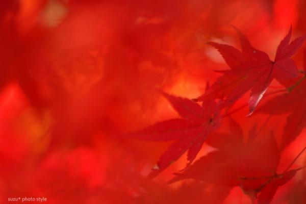 momijiiro1_org-6.jpg