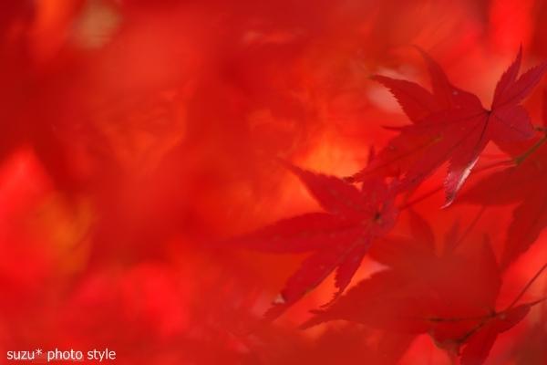momijiiro1_org.jpg