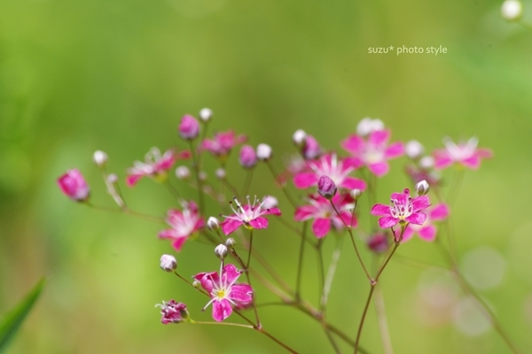 pink-kasumi.JPG