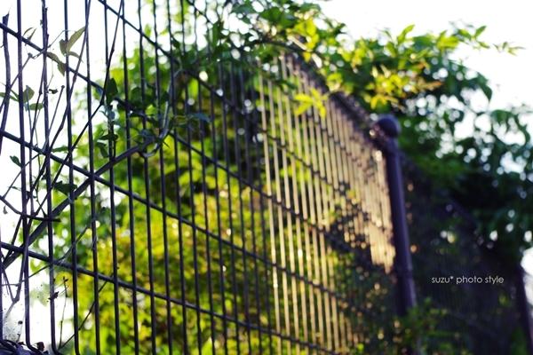yuudoki-fence.JPG